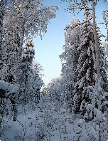 Поездка в Лапландию фото 3