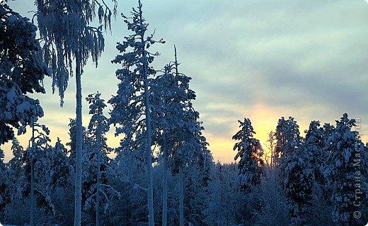 Поездка в Лапландию фото 5