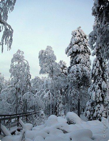 Поездка в Лапландию фото 26