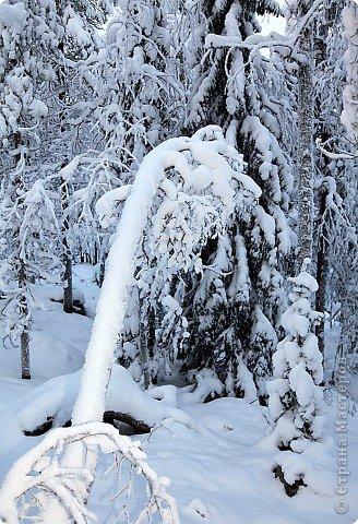 Поездка в Лапландию фото 27
