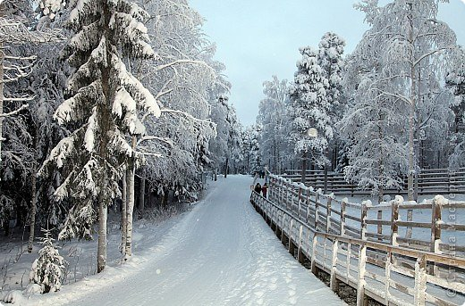 Поездка в Лапландию фото 28