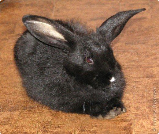 Все началось с желания завести такого зверька, с которым можно играть, но не бояться когтей и укусов. И вот, после 3х дневных уговоров мужа, я с диким трепетом в сердце и непередаваемым волнением, в конун НГ, 31 декабря, поехала в зоомагазин за кроликом! Но как же я была растроена, когда поняла, что найти кролика, в НГ, причем в год кролика - на грани фантастики!  фото 1