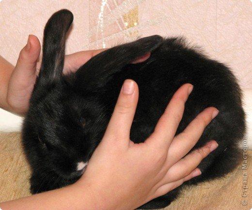Все началось с желания завести такого зверька, с которым можно играть, но не бояться когтей и укусов. И вот, после 3х дневных уговоров мужа, я с диким трепетом в сердце и непередаваемым волнением, в конун НГ, 31 декабря, поехала в зоомагазин за кроликом! Но как же я была растроена, когда поняла, что найти кролика, в НГ, причем в год кролика - на грани фантастики!  фото 3
