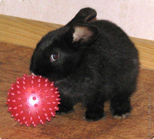 Все началось с желания завести такого зверька, с которым можно играть, но не бояться когтей и укусов. И вот, после 3х дневных уговоров мужа, я с диким трепетом в сердце и непередаваемым волнением, в конун НГ, 31 декабря, поехала в зоомагазин за кроликом! Но как же я была растроена, когда поняла, что найти кролика, в НГ, причем в год кролика - на грани фантастики!  фото 4
