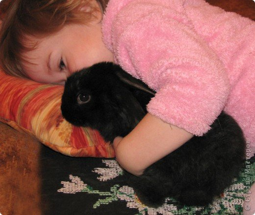 Все началось с желания завести такого зверька, с которым можно играть, но не бояться когтей и укусов. И вот, после 3х дневных уговоров мужа, я с диким трепетом в сердце и непередаваемым волнением, в конун НГ, 31 декабря, поехала в зоомагазин за кроликом! Но как же я была растроена, когда поняла, что найти кролика, в НГ, причем в год кролика - на грани фантастики!  фото 8