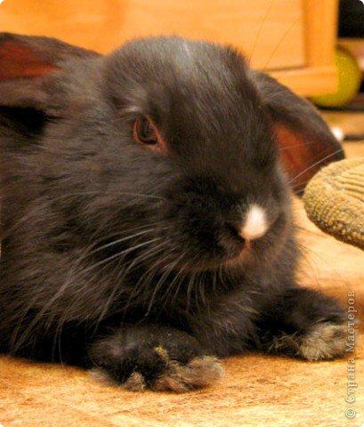 Все началось с желания завести такого зверька, с которым можно играть, но не бояться когтей и укусов. И вот, после 3х дневных уговоров мужа, я с диким трепетом в сердце и непередаваемым волнением, в конун НГ, 31 декабря, поехала в зоомагазин за кроликом! Но как же я была растроена, когда поняла, что найти кролика, в НГ, причем в год кролика - на грани фантастики!  фото 9