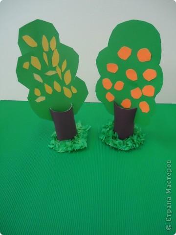 Цитрусовый сад фото 3