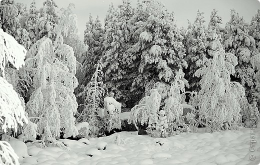 Поездка в Лапландию часть2 фото 2