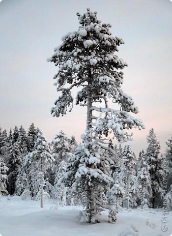 Поездка в Лапландию часть2 фото 7
