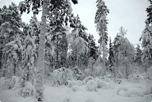 Поездка в Лапландию часть2 фото 11