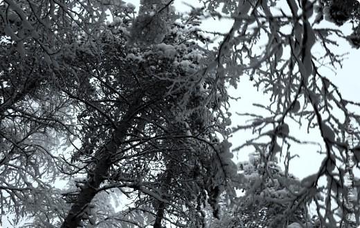 Поездка в Лапландию часть2 фото 12