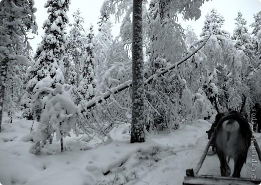 Поездка в Лапландию часть2 фото 17