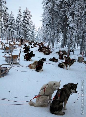 Поездка в Лапландию часть2 фото 36