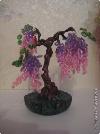 """Первое """"сердечное дерево"""". фото 2"""