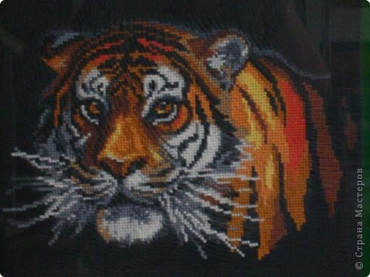Это еще одна работа моей дочери. По-моему, шикарный тигр получился (во всяком случае, мне ооочень нравится).