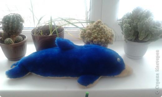 Дельфинчик фото 1