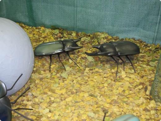 Огромные металлические жуки. фото 3