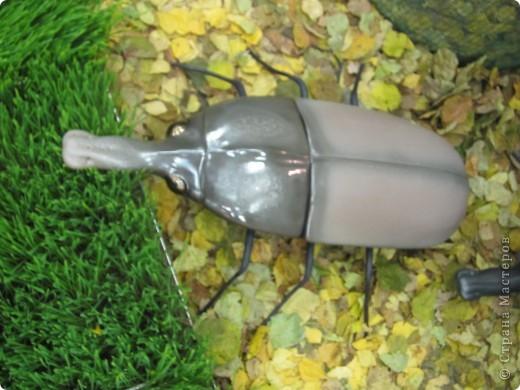 Огромные металлические жуки. фото 5