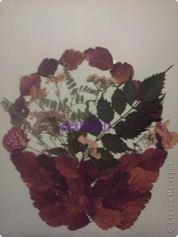 Из сушеных цветочков.... фото 1