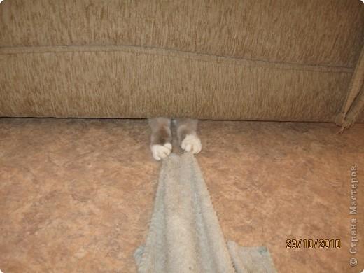 Очень люблю кошек, особенно сиамских. Имею трех. Самой старшей Симе-15 лет,ее дочке Соньке-7, а найденышу Касе- Касандре- 1год. Год назад в самый мороз дочь принесла домой, найденное в снегу чудище, блохастое, со сломанным бедром и очень грязное. Но теперь -это чудище завоевало любовь всей семьи! Наша Кася!!!! фото 4