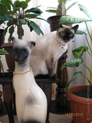 Очень люблю кошек, особенно сиамских. Имею трех. Самой старшей Симе-15 лет,ее дочке Соньке-7, а найденышу Касе- Касандре- 1год. Год назад в самый мороз дочь принесла домой, найденное в снегу чудище, блохастое, со сломанным бедром и очень грязное. Но теперь -это чудище завоевало любовь всей семьи! Наша Кася!!!! фото 13