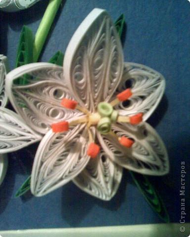 Лилии фото 2