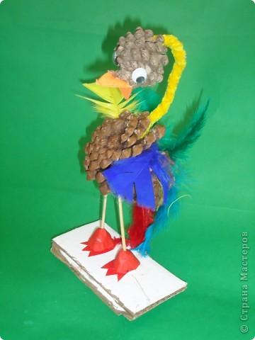 Любопытный птах фото 1