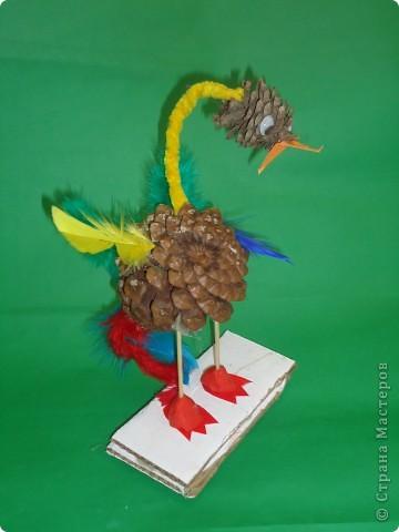 Любопытный птах фото 3
