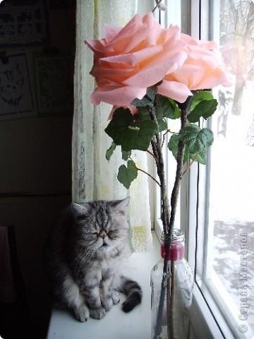 Цветы из гофрированной бумаги. Листья брала готовые.  Стебли - прутья от кустов. Кошка натуральная))))