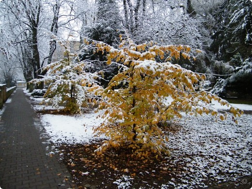 Вот таким был наш первый снег! Зима у нас началась очень рано для Германии - в ноябре. фото 6