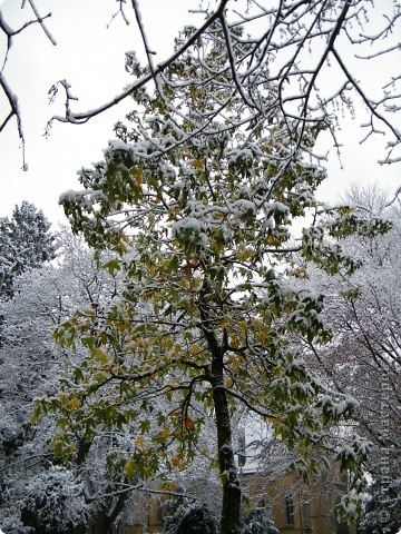 Вот таким был наш первый снег! Зима у нас началась очень рано для Германии - в ноябре. фото 7