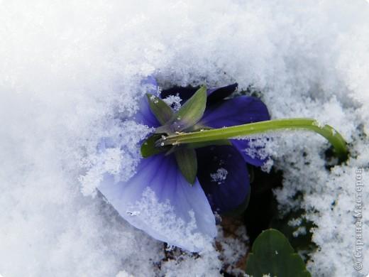 Вот таким был наш первый снег! Зима у нас началась очень рано для Германии - в ноябре. фото 14