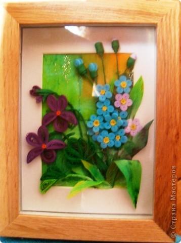Спасибо всем, кто помогал мне выбрать третьи цветы. Я склонилась к фиалкам и незабудкам фото 2