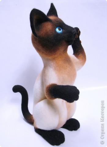 Портретный котик Цезарь. фото 3