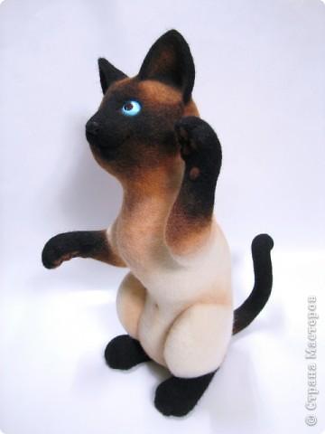 Портретный котик Цезарь. фото 5