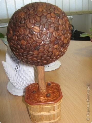 кофейное дерево фото 5