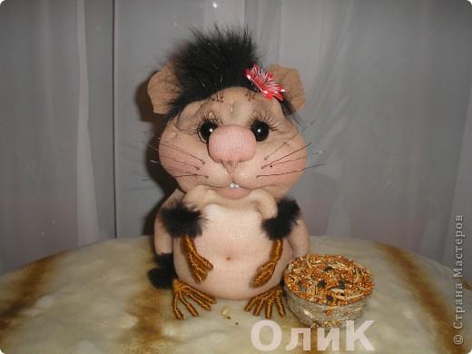 Запасливая хомячка Соня. фото 1