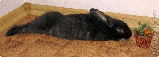 Все началось с желания завести такого зверька, с которым можно играть, но не бояться когтей и укусов. И вот, после 3х дневных уговоров мужа, я с диким трепетом в сердце и непередаваемым волнением, в конун НГ, 31 декабря, поехала в зоомагазин за кроликом! Но как же я была растроена, когда поняла, что найти кролика, в НГ, причем в год кролика - на грани фантастики!  фото 12