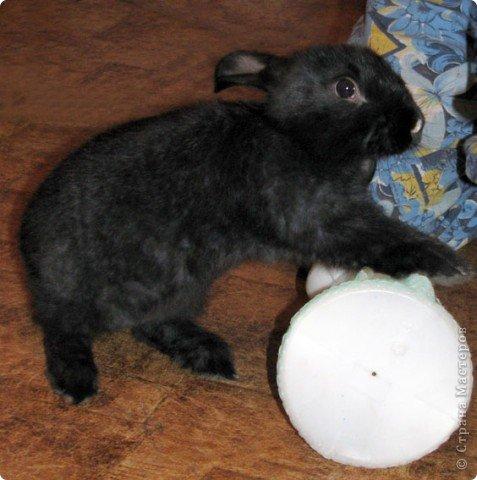 Все началось с желания завести такого зверька, с которым можно играть, но не бояться когтей и укусов. И вот, после 3х дневных уговоров мужа, я с диким трепетом в сердце и непередаваемым волнением, в конун НГ, 31 декабря, поехала в зоомагазин за кроликом! Но как же я была растроена, когда поняла, что найти кролика, в НГ, причем в год кролика - на грани фантастики!  фото 14