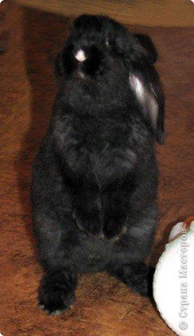 Все началось с желания завести такого зверька, с которым можно играть, но не бояться когтей и укусов. И вот, после 3х дневных уговоров мужа, я с диким трепетом в сердце и непередаваемым волнением, в конун НГ, 31 декабря, поехала в зоомагазин за кроликом! Но как же я была растроена, когда поняла, что найти кролика, в НГ, причем в год кролика - на грани фантастики!  фото 15