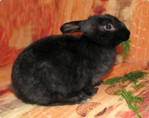 Все началось с желания завести такого зверька, с которым можно играть, но не бояться когтей и укусов. И вот, после 3х дневных уговоров мужа, я с диким трепетом в сердце и непередаваемым волнением, в конун НГ, 31 декабря, поехала в зоомагазин за кроликом! Но как же я была растроена, когда поняла, что найти кролика, в НГ, причем в год кролика - на грани фантастики!  фото 17