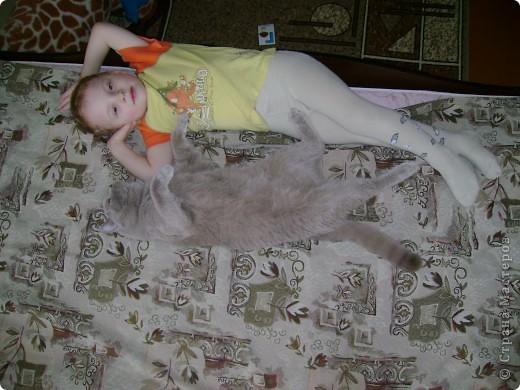 Наш Британский короткошерстный котик Барни. фото 21