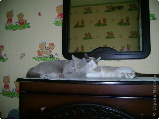 Наш Британский короткошерстный котик Барни. фото 19