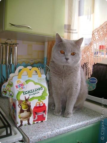 Наш Британский короткошерстный котик Барни. фото 17