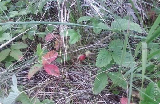 Природа моей Родины - Оренбуржье. фото 8
