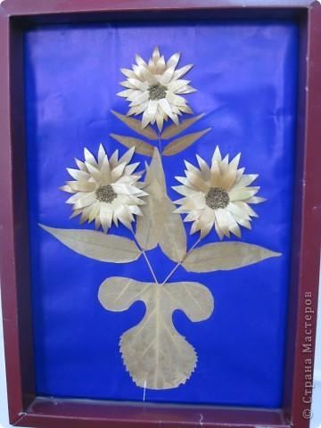 """Эти розы то же дал мне интернет. Композиции создавали сами. На краевой выставке """"Зеркало природы"""" заняли 1 место. фото 15"""