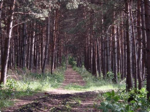 Природа моей Родины - Оренбуржье. фото 4