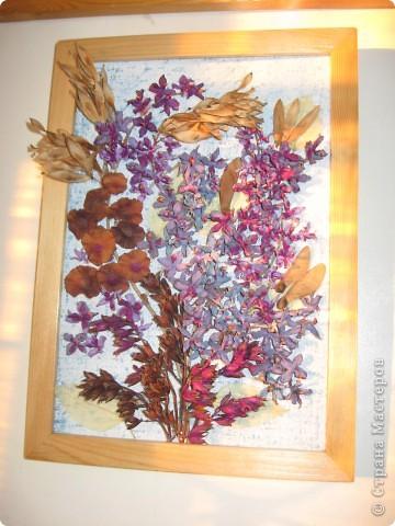 """Эти розы то же дал мне интернет. Композиции создавали сами. На краевой выставке """"Зеркало природы"""" заняли 1 место. фото 13"""