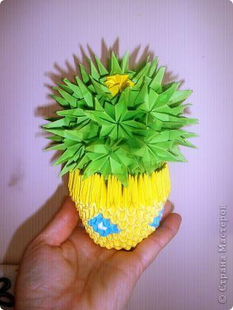 мой кактус