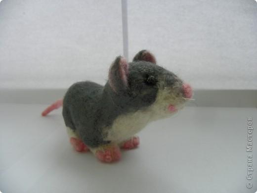 Крысик-симпотяшка! фото 1